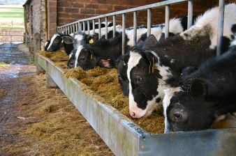Cargill Data Helps Farmers Make Happier Cows That Make More Milk